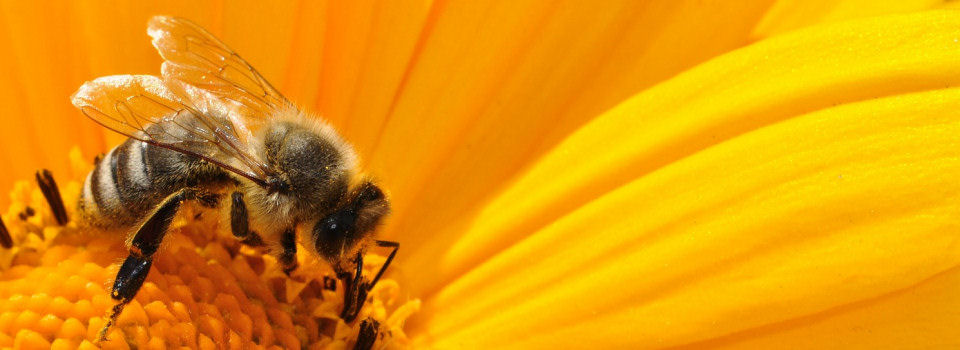 BeeAndGarden.com