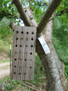 Make a bee house for Orchard Bees with a 4x4
