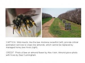 2013-04-18-kennedy_pollinator2